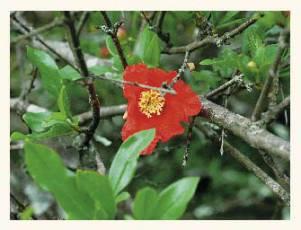 Цветы дикорастущие краснодарского края 41