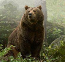 медведь фото бурый